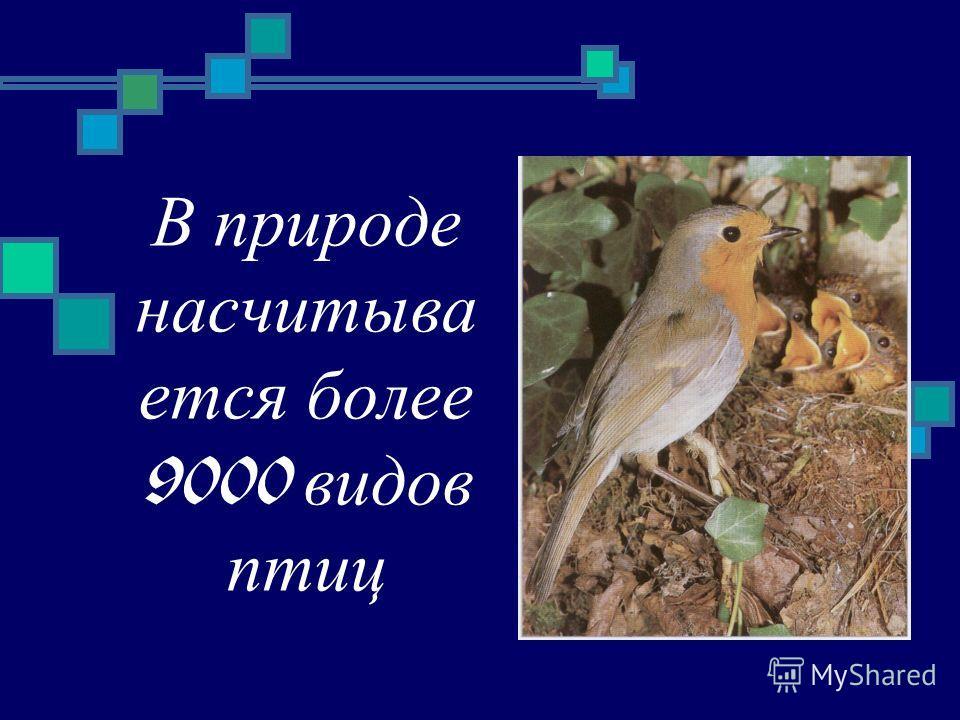 В природе насчитыва ется более 9000 видов птиц