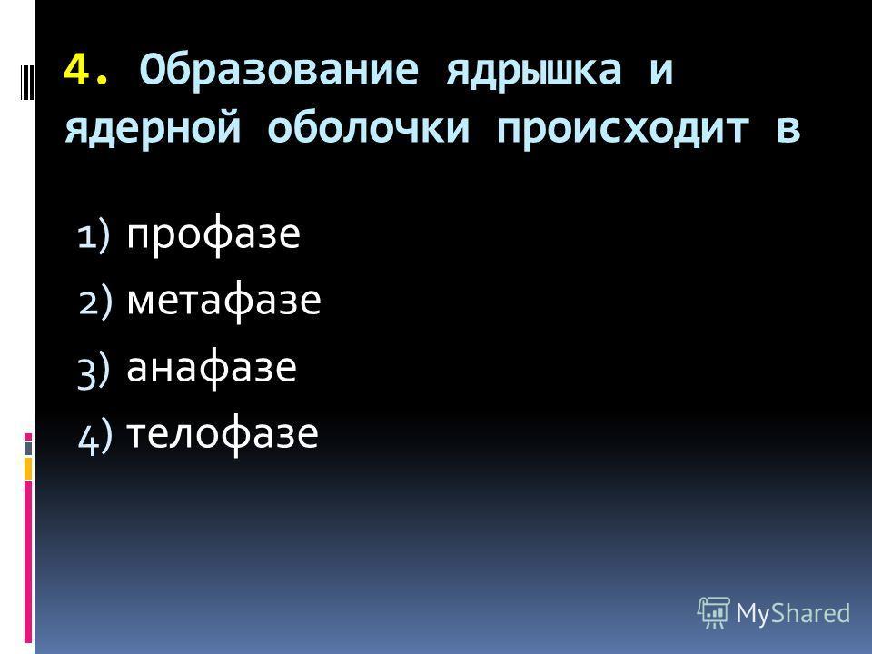 4. Образование ядрышка и ядерной оболочки происходит в 1) профазе 2) метафазе 3) анафазе 4) телофазе