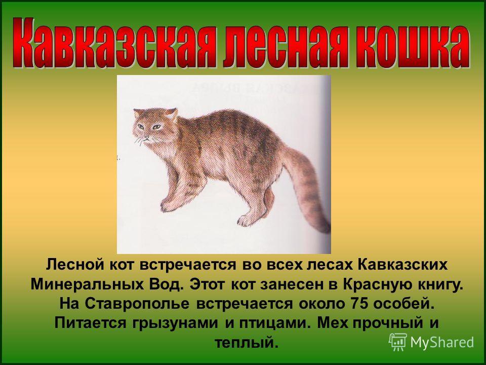 Лесной кот встречается во всех лесах Кавказских Минеральных Вод. Этот кот занесен в Красную книгу. На Ставрополье встречается около 75 особей. Питается грызунами и птицами. Мех прочный и теплый.