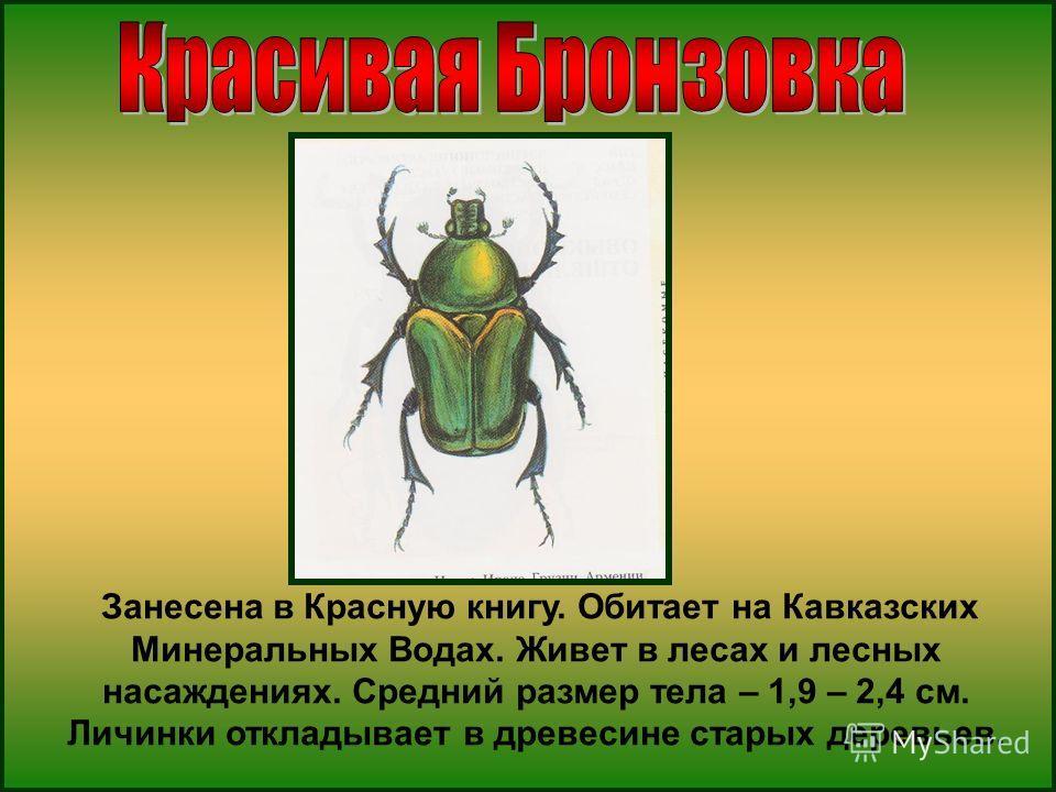 Занесена в Красную книгу. Обитает на Кавказских Минеральных Водах. Живет в лесах и лесных насаждениях. Средний размер тела – 1,9 – 2,4 см. Личинки откладывает в древесине старых деревьев.