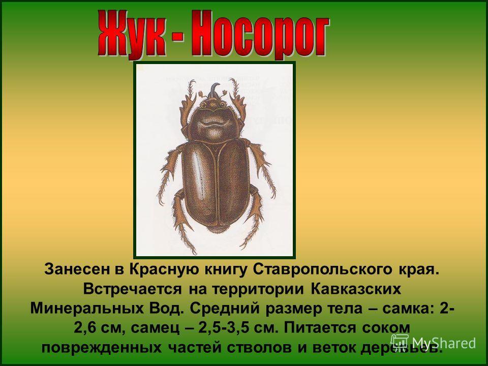 Занесен в Красную книгу Ставропольского края. Встречается на территории Кавказских Минеральных Вод. Средний размер тела – самка: 2- 2,6 см, самец – 2,5-3,5 см. Питается соком поврежденных частей стволов и веток деревьев.