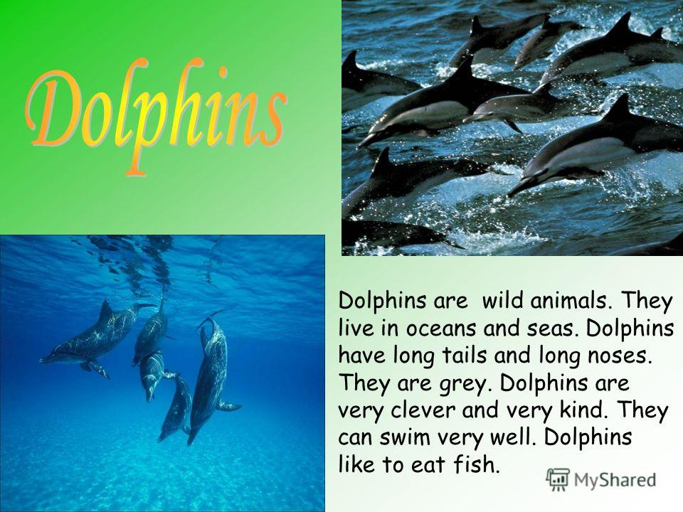 Dolphins are wild animals. They live in oceans and seas. Dolphins have long tails and long noses. They are grey. Dolphins are very clever and very kind. They can swim very well. Dolphins like to eat fish.