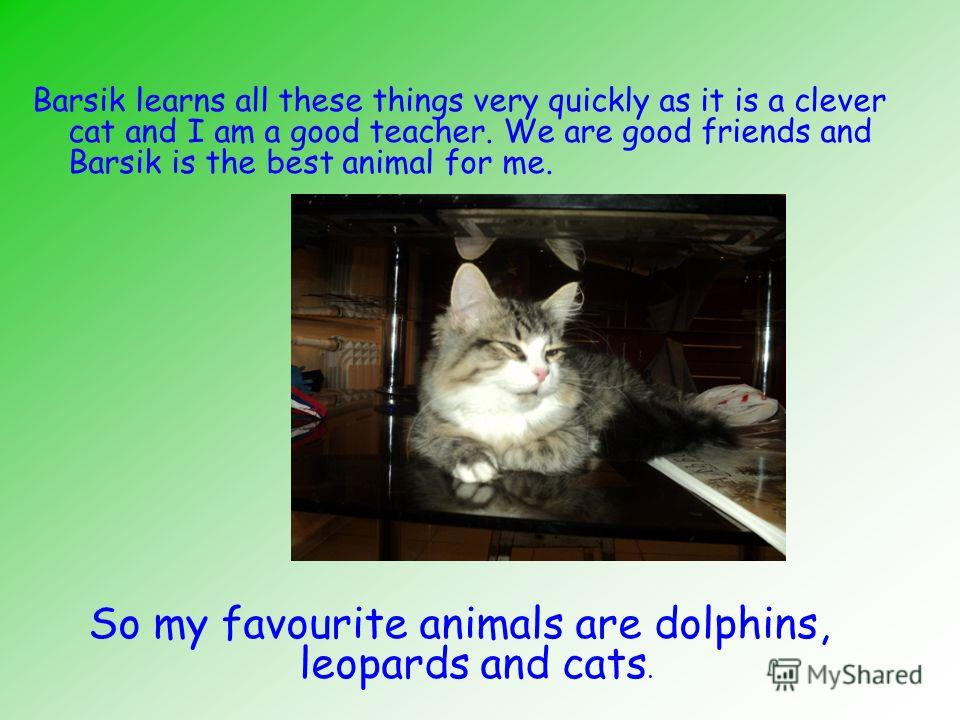 essay on my favourite animal Essay 3 favorite animal my favorite animal my favorite animal is a cat cats have interesting characters they can jump high.