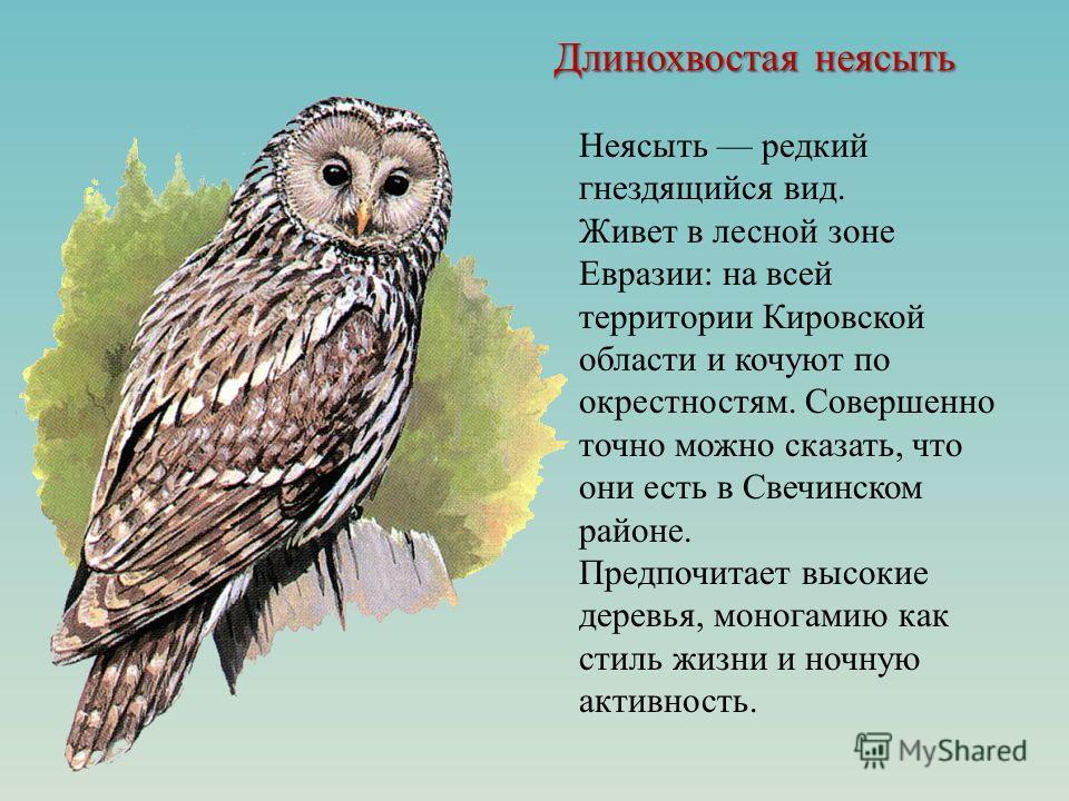 Длинохвостая неясыть Неясыть редкий гнездящийся вид. Живет в лесной зоне Евразии: на всей территории Кировской области и кочуют по окрестностям. Совершенно точно можно сказать, что они есть в Свечинском районе. Предпочитает высокие деревья, моногамию