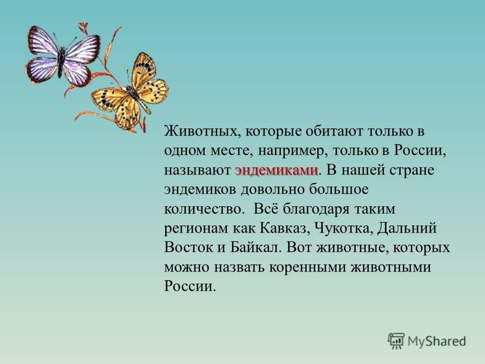 эндемиками Животных, которые обитают только в одном месте, например, только в России, называют эндемиками. В нашей стране эндемиков довольно большое количество. Всё благодаря таким регионам как Кавказ, Чукотка, Дальний Восток и Байкал. Вот животные,
