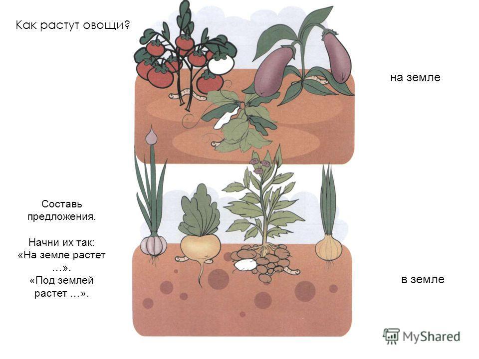 Как растут овощи? на земле в земле Составь предложения. Начни их так: «На земле растет …». «Под землей растет …».
