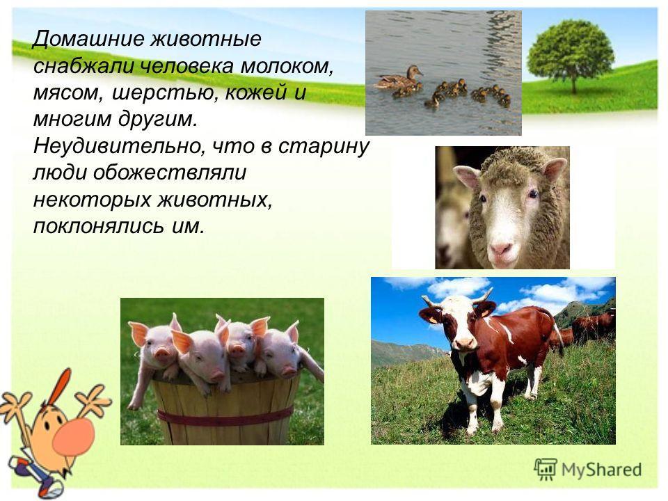Домашние животные снабжали человека молоком, мясом, шерстью, кожей и многим другим. Неудивительно, что в старину люди обожествляли некоторых животных, поклонялись им.