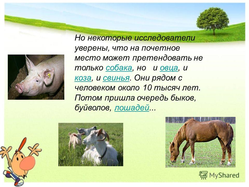 Но некоторые исследователи уверены, что на почетное место может претендовать не только собака, но и овца, и коза, и свинья. Они рядом с человеком около 10 тысяч лет. Потом пришла очередь быков, буйволов, лошадей...собакаовца козасвиньялошадей