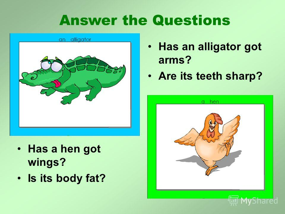 Has a hen got wings? Is its body fat? Has an alligator got arms? Are its teeth sharp? Answer the Questions