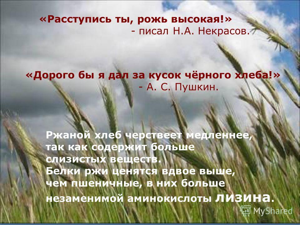 12 «Расступись ты, рожь высокая!» - писал Н.А. Некрасов. «Дорого бы я дал за кусок чёрного хлеба!» - А. С. Пушкин. Ржаной хлеб черствеет медленнее, так как содержит больше слизистых веществ. Белки ржи ценятся вдвое выше, чем пшеничные, в них больше н