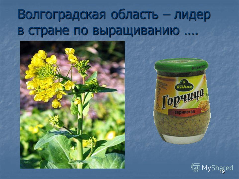 19 Волгоградская область – лидер в стране по выращиванию ….