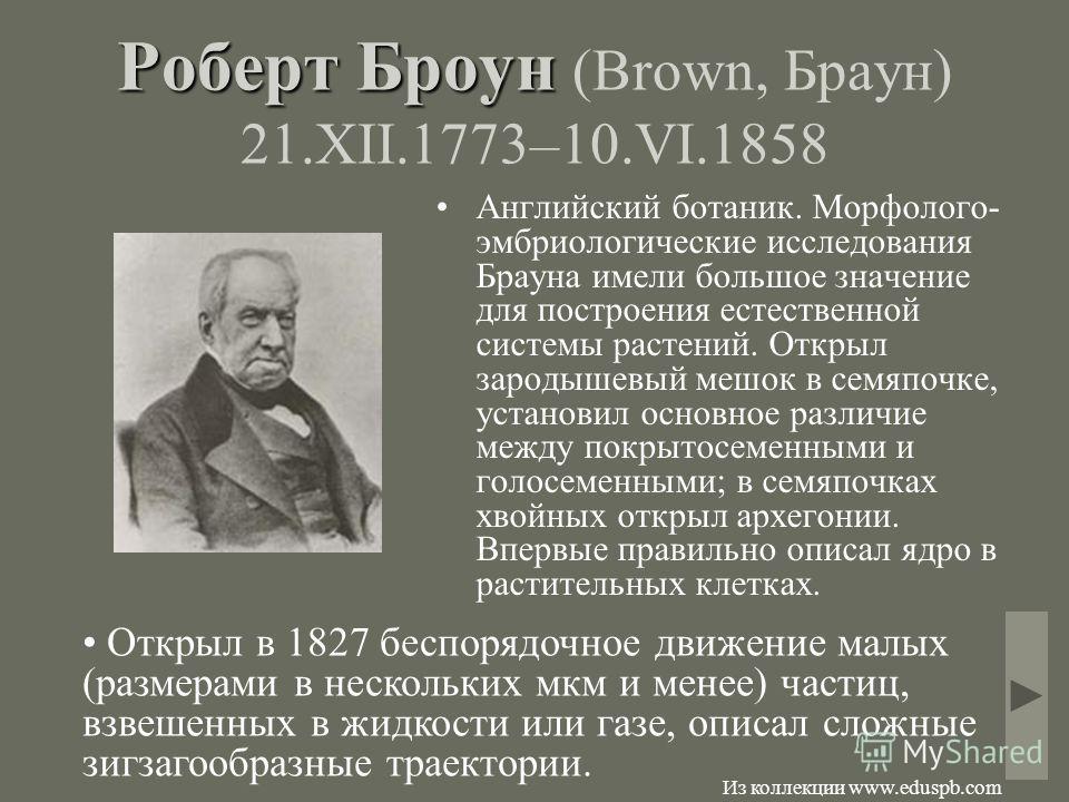 Роберт Броун Роберт Броун (Brown, Браун) 21.XII.1773–10.VI.1858 Английский ботаник. Морфолого- эмбриологические исследования Брауна имели большое значение для построения естественной системы растений. Открыл зародышевый мешок в семяпочке, установил о