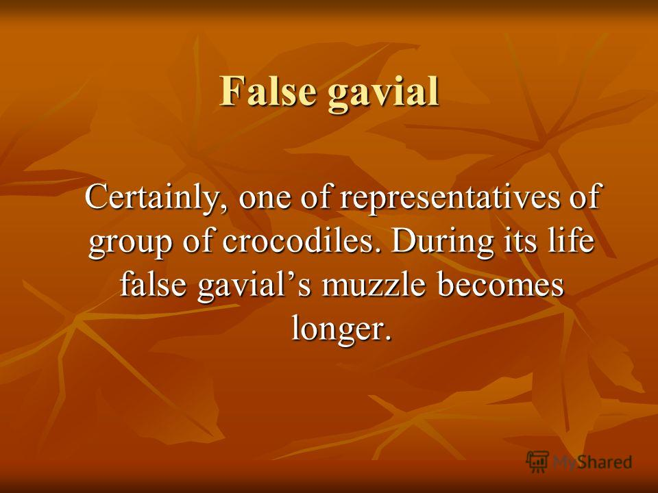 False gavial Certainly, one of representatives of group of crocodiles. During its life false gavials muzzle becomes longer.