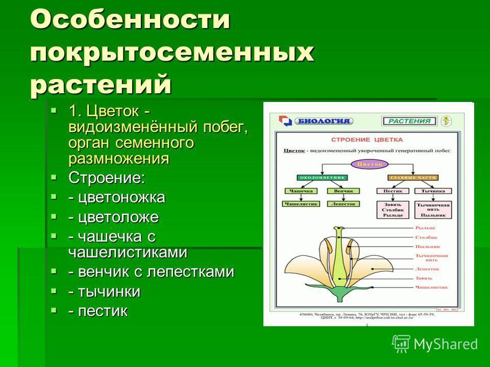 Особенности покрытосеменных растений 1. Цветок - видоизменённый побег, орган семенного размножения 1. Цветок - видоизменённый побег, орган семенного размножения Строение: Строение: - цветоножка - цветоножка - цветоложе - цветоложе - чашечка с чашелис