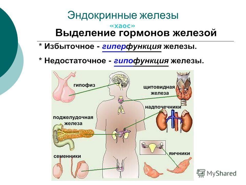 Эндокринные железы «хаос»