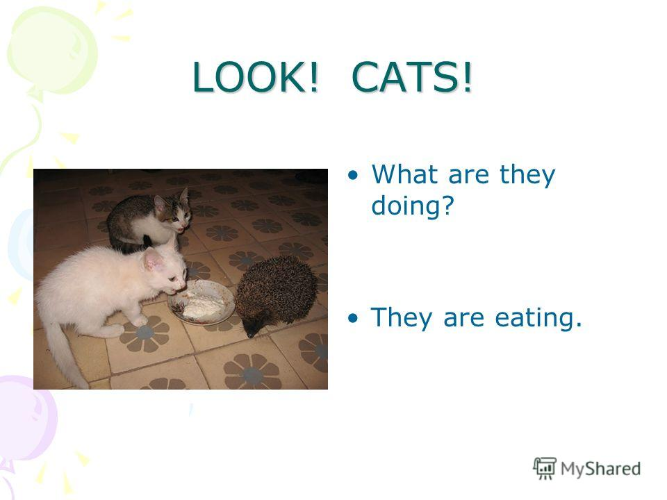 What are they doing? They are eating. LOOK! CATS!