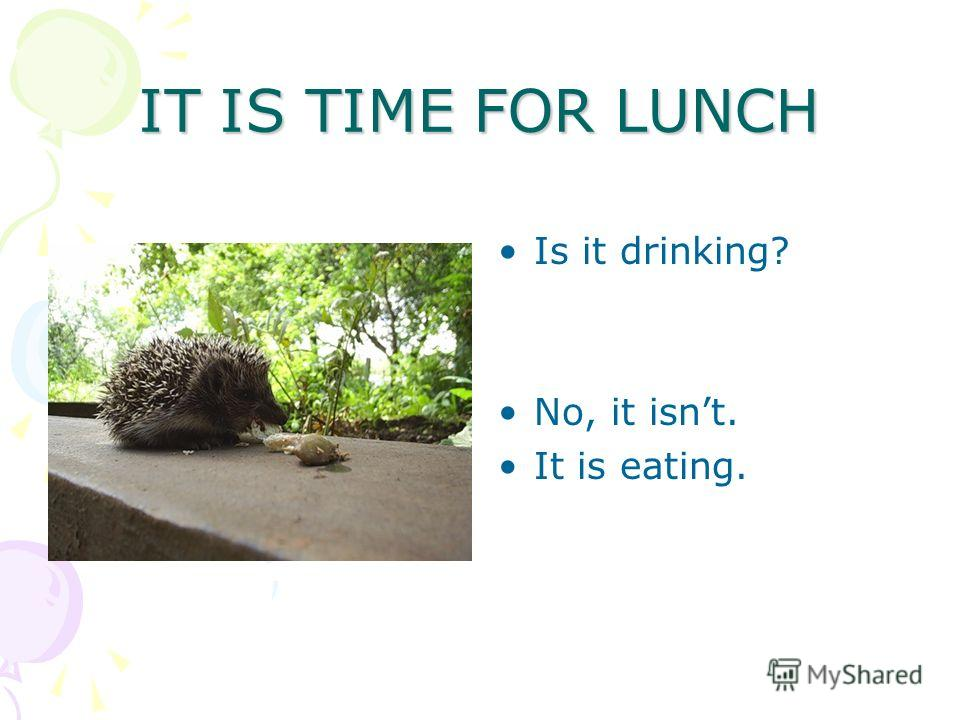 IT IS TIME FOR LUNCH Is it drinking? No, it isnt. It is eating.