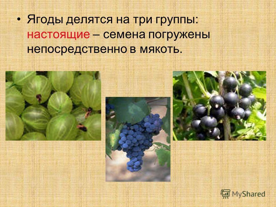 Ягоды делятся на три группы: настоящие – семена погружены непосредственно в мякоть.