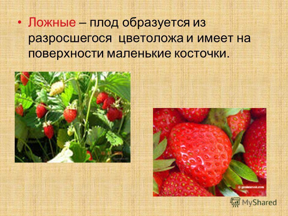 Ложные – плод образуется из разросшегося цветоложа и имеет на поверхности маленькие косточки.