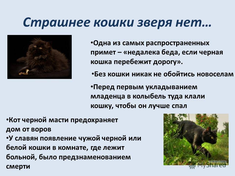 Страшнее кошки зверя нет… Одна из самых распространенных примет – «недалека беда, если черная кошка перебежит дорогу». Без кошки никак не обойтись новоселам Перед первым укладыванием младенца в колыбель туда клали кошку, чтобы он лучше спал Кот черно