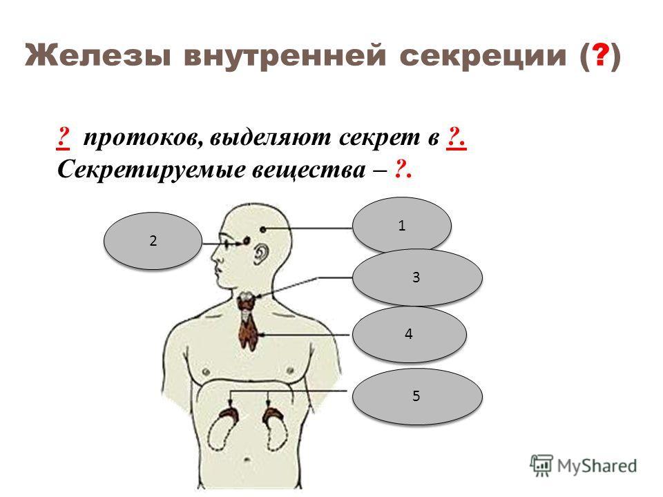Железы внутренней секреции (?) ? протоков, выделяют секрет в ?. Секретируемые вещества – ?. 1 1 2 2 3 3 4 4 5 5