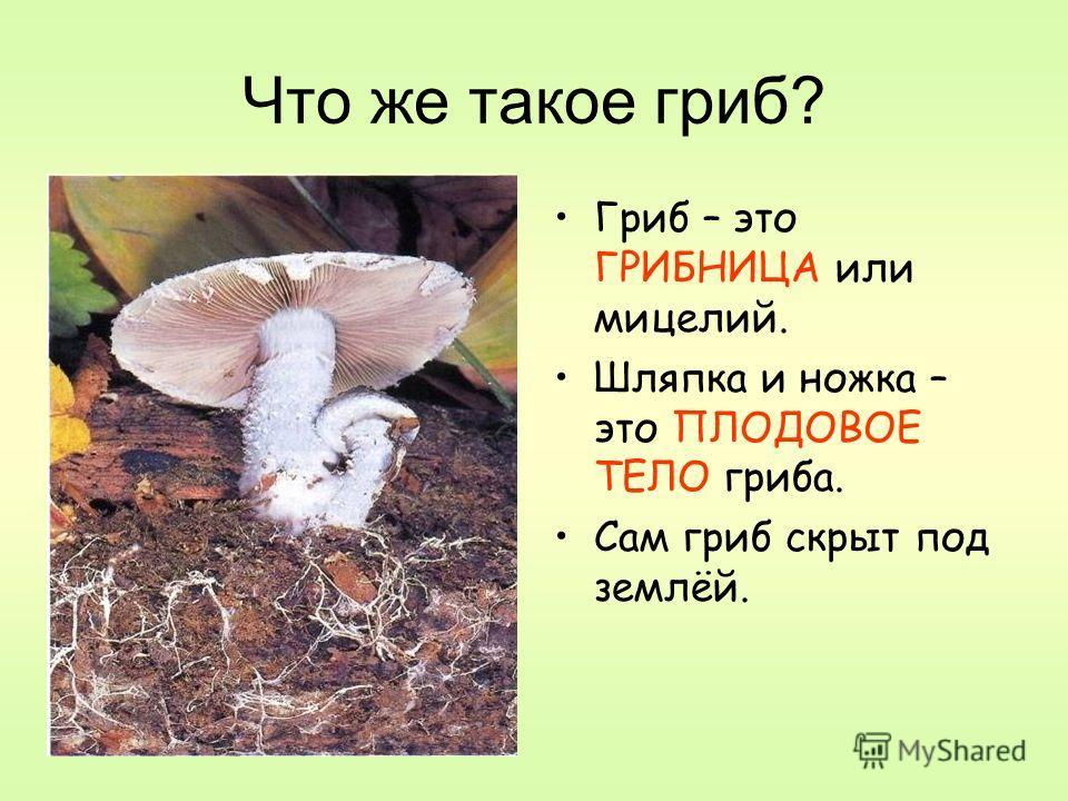Что же такое гриб? Гриб – это ГРИБНИЦА или мицелий. Шляпка и ножка – это ПЛОДОВОЕ ТЕЛО гриба. Сам гриб скрыт под землёй.