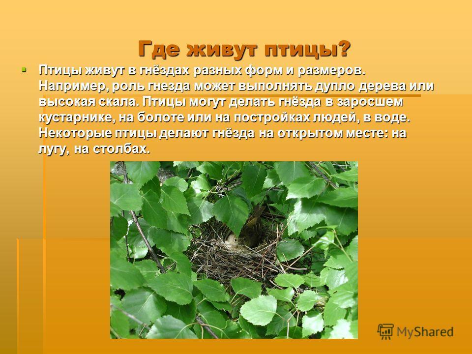 Где живут птицы? Птицы живут в гнёздах разных форм и размеров. Например, роль гнезда может выполнять дупло дерева или высокая скала. Птицы могут делать гнёзда в заросшем кустарнике, на болоте или на постройках людей, в воде. Некоторые птицы делают гн