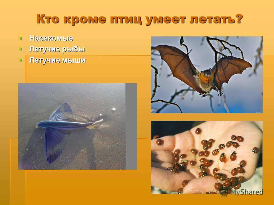 Кто кроме птиц умеет летать? Насекомые Насекомые Летучие рыбы Летучие рыбы Летучие мыши Летучие мыши