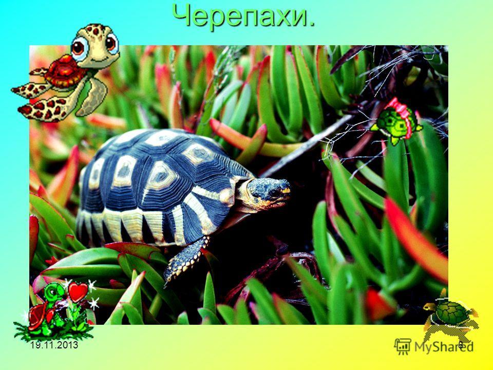 19.11.20138 Черепахи.