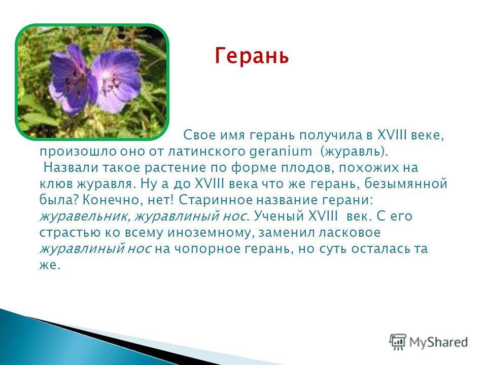 Герань Свое имя герань получила в XVIII веке, произошло оно от латинского geranium (журавль). Назвали такое растение по форме плодов, похожих на клюв журавля. Ну а до XVIII века что же герань, безымянной была? Конечно, нет! Старинное название герани: