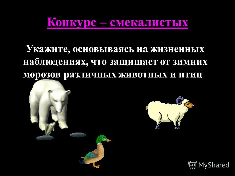 Конкурс – смекалистых Укажите, основываясь на жизненных наблюдениях, что защищает от зимних морозов различных животных и птиц