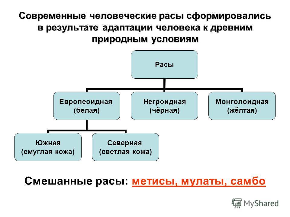 Современные человеческие расы сформировались в результате адаптации человека к древним природным условиям Расы Европеоидная (белая) Южная (смуглая кожа) Северная (светлая кожа) Негроидная (чёрная) Монголоидная (жёлтая) Смешанные расы: метисы, мулаты,