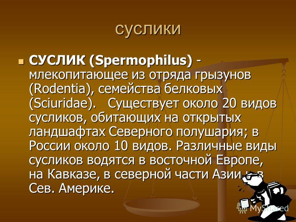 суслики СУСЛИК (Spermophilus) - млекопитающее из отряда грызунов (Rodentia), семейства белковых (Sciuridae). Существует около 20 видов сусликов, обитающих на открытых ландшафтах Северного полушария; в России около 10 видов. Различные виды сусликов во