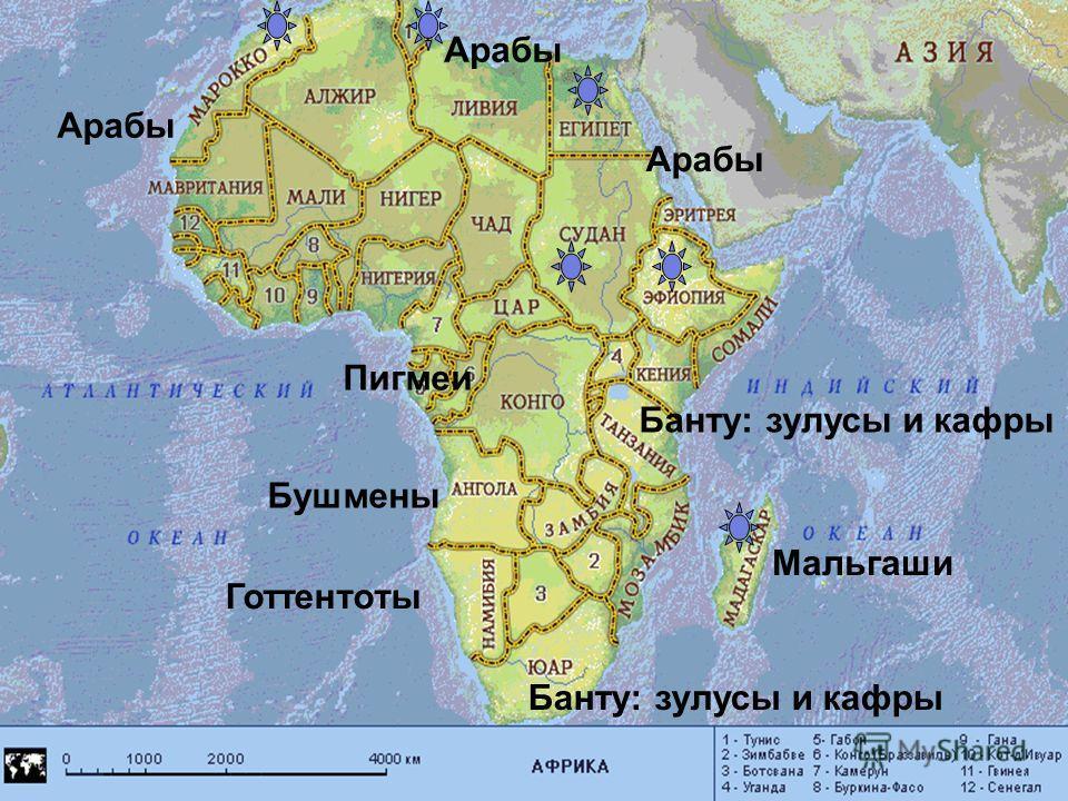 Арабы Банту: зулусы и кафры Готтентоты Мальгаши Бушмены Пигмеи