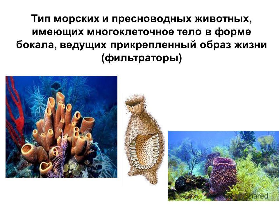 Тип морских и пресноводных животных, имеющих многоклеточное тело в форме бокала, ведущих прикрепленный образ жизни (фильтраторы)