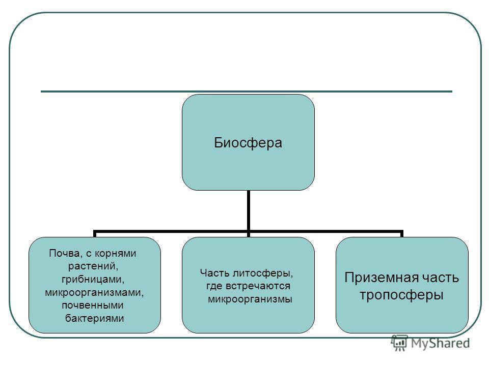 Биосфера Почва, с корнями растений, грибницами, микроорганизмами, почвенными бактериями Часть литосферы, где встречаются микроорганизмы Приземная часть тропосферы