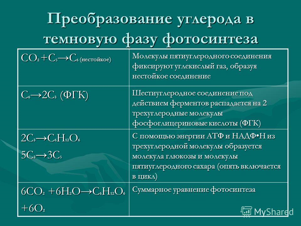Разработка урока по биологии по теме фотосинтез световая фаза фотолиз 10 класс 8 класс