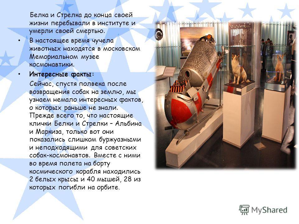 Белка и Стрелка до конца своей жизни перебывали в институте и умерли своей смертью. В настоящее время чучела животных находятся в московском Мемориальном музее космонавтики. Интересные факты: Сейчас, спустя полвека после возвращения собак на землю, м