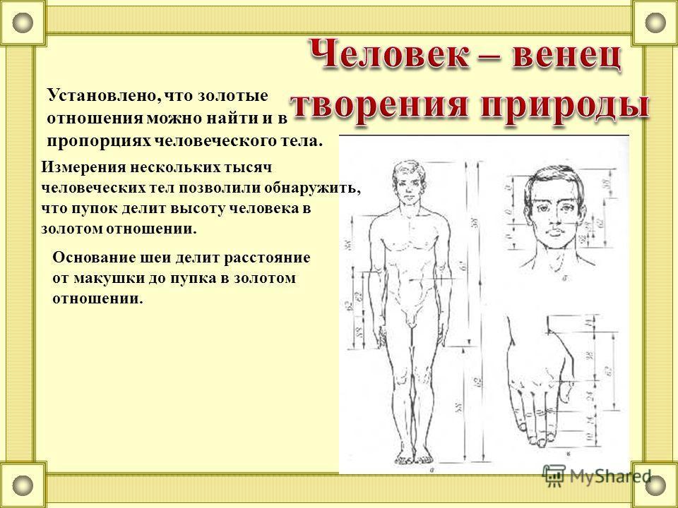 Установлено, что золотые отношения можно найти и в пропорциях человеческого тела. Основание шеи делит расстояние от макушки до пупка в золотом отношении. Измерения нескольких тысяч человеческих тел позволили обнаружить, что пупок делит высоту человек