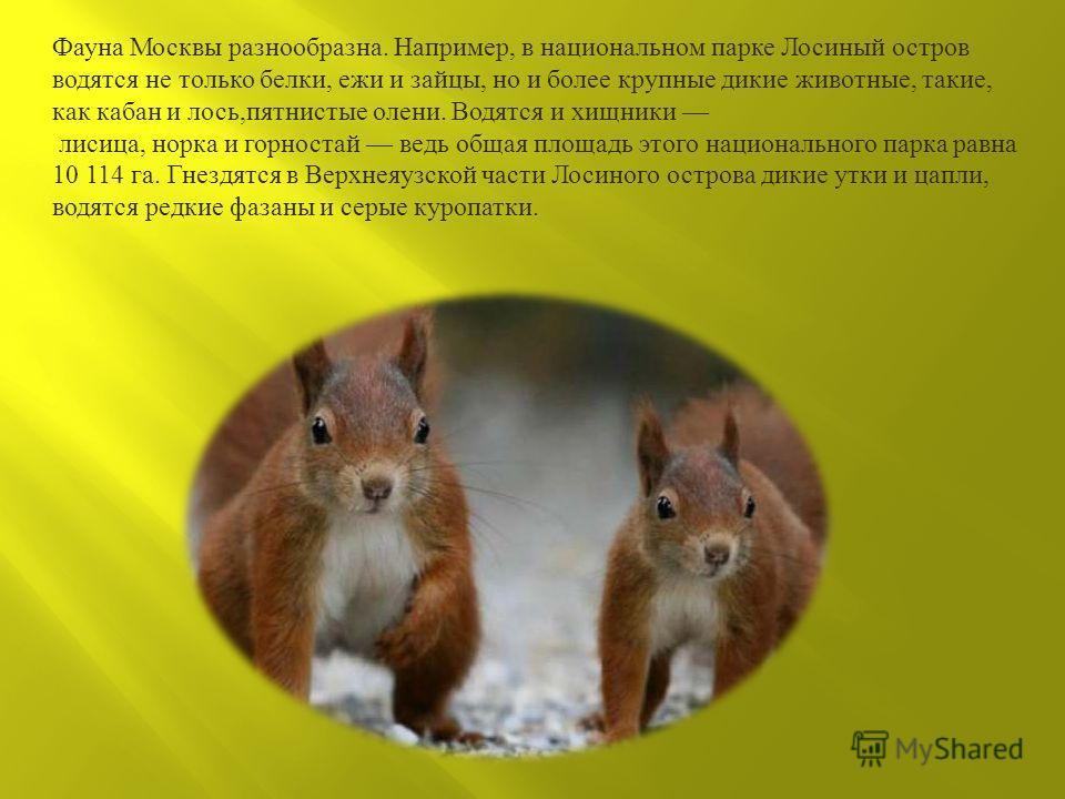 Фауна Москвы разнообразна. Например, в национальном парке Лосиный остров водятся не только белки, ежи и зайцы, но и более крупные дикие животные, такие, как кабан и лось, пятнистые олени. Водятся и хищники лисица, норка и горностай ведь общая площадь