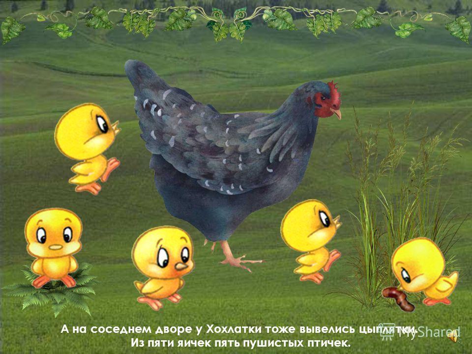 Стала Пеструшка с цыплятами ходить, стала их по улице водить. Ходит, не зевает, им корм добывает.