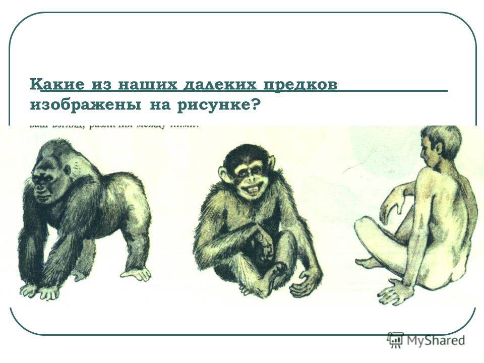 Какие из наших далеких предков изображены на рисунке?