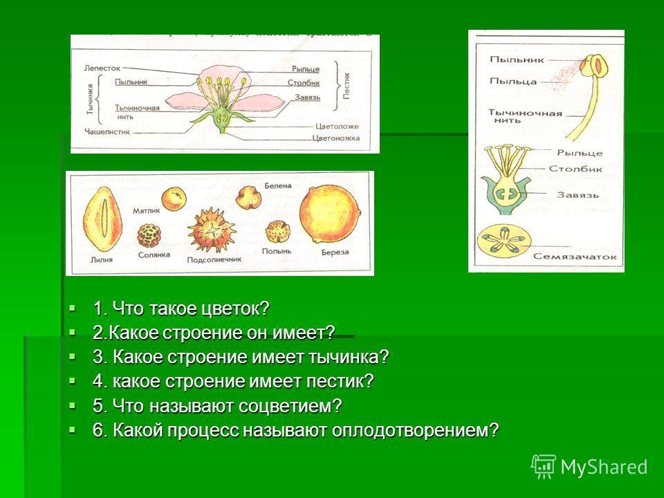 1. Что такое цветок? 1. Что такое цветок? 2.Какое строение он имеет? 2.Какое строение он имеет? 3. Какое строение имеет тычинка? 3. Какое строение имеет тычинка? 4. какое строение имеет пестик? 4. какое строение имеет пестик? 5. Что называют соцветие
