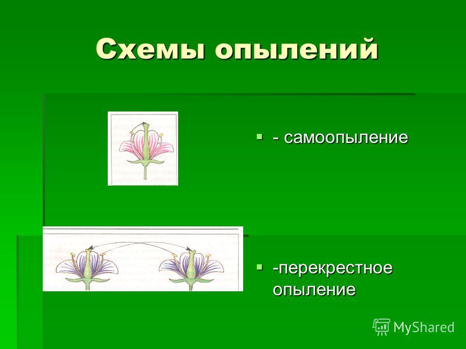 Схемы опылений - самоопыление - самоопыление -перекрестное опыление -перекрестное опыление