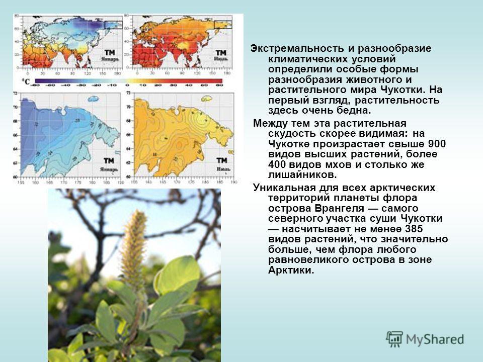 Экстремальность и разнообразие климатических условий определили особые формы разнообразия животного и растительного мира Чукотки. На первый взгляд, растительность здесь очень бедна. Между тем эта растительная скудость скорее видимая: на Чукотке произ