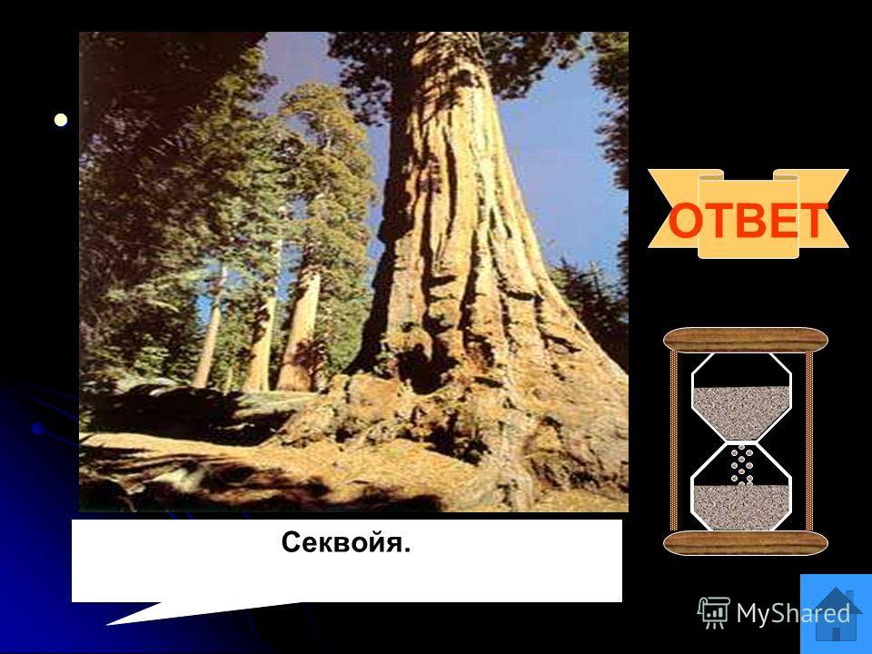 Вопрос 11 На суходольном лугу скосили все растения. Вам предложили выяснить, росли ли на лугу растения из семейства бобовых. Выполнимо ли это задание? Ответ поясните. На суходольном лугу скосили все растения. Вам предложили выяснить, росли ли на лугу