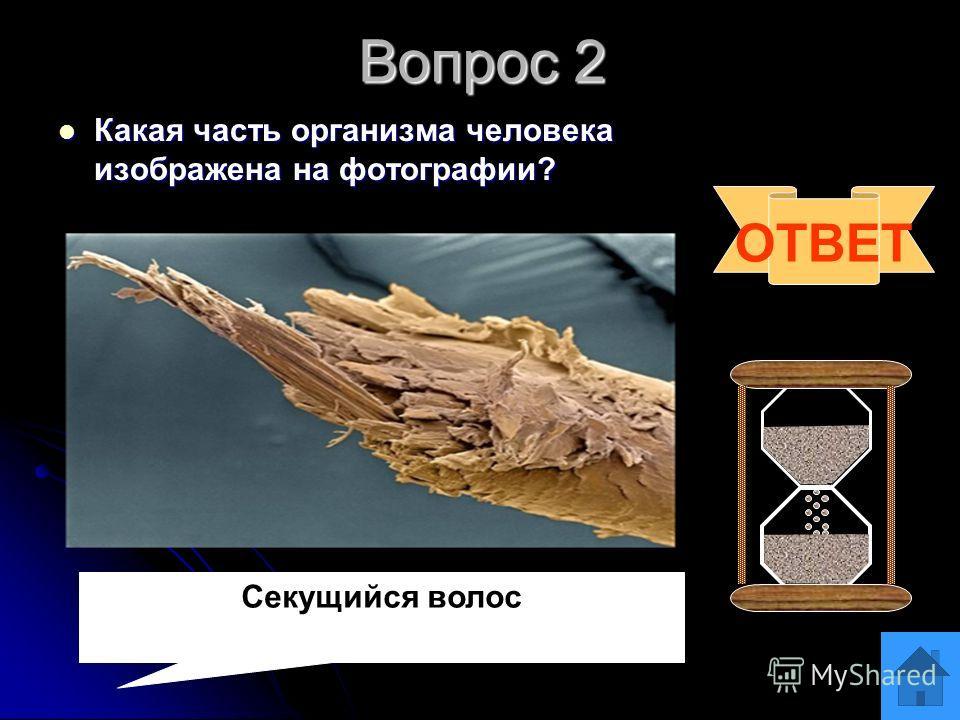 Вопрос 1 Чем интересны эти земноводные в особенностях размножения и заботе о потомстве? Чем интересны эти земноводные в особенностях размножения и заботе о потомстве? ОТВЕТ Особенности связаны с: жаба- повитуха наматывает ленты икры на ноги, а пипа «