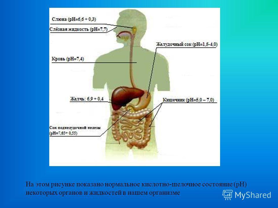 На этом рисунке показано нормальное кислотно-щелочное состояние (рН) некоторых органов и жидкостей в нашем организме