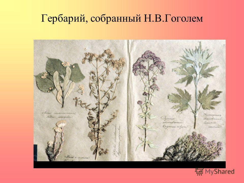 Гербарий, собранный Н.В.Гоголем