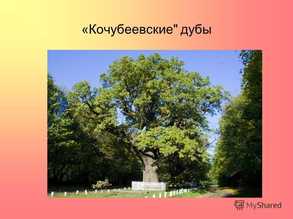 «Кочубеевские дубы